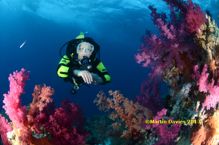 Image taken in the Red Sea April/May 2012
