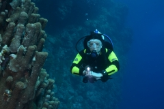Image taken in the Red Sea April 2012
