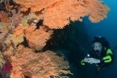 Red-Sea-Elphinstone-24042012-©Martin-Davies-040