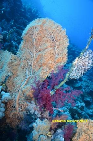 Red-Sea-Deadalus-5-22042012-©Martin-Davies-001