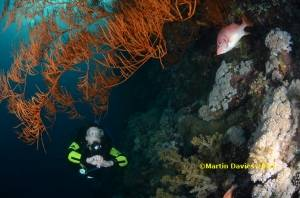 Red-Sea-Elphinstone-20042012-©Martin-Davies-014