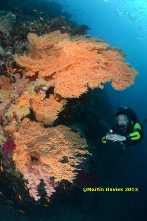 Red-Sea-Elphinstone-24042012-©Martin-Davies-040