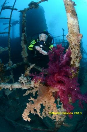 Red-Sea-Gianis-D-01052012-©Martin-Davies-011