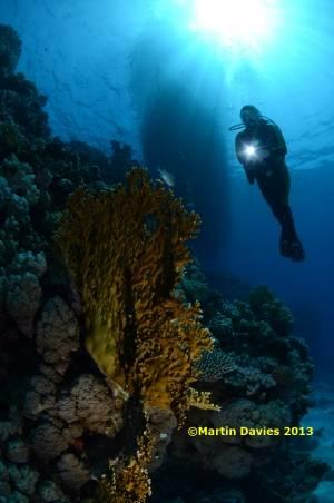 Red-Sea-Image-Abu-Galawa-Yacht-20120616-©Martin-Davies-017
