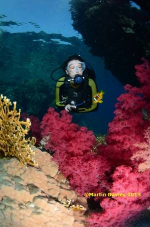 Red-Sea-Image-Fury-Shoal-The-Tower-20120620-©Martin-Davies-034