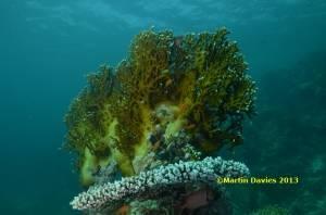Red-Sea-Marsa-Shouna-25042012-©Martin-Davies-036