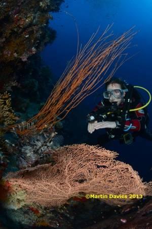 Red-Sea-Ras-Umm-Sid-05052012-©Martin-Davies-016