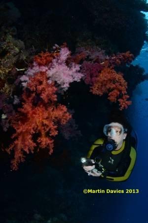 Red-Sea-Rocky-Island18062012-©Martin-Davies-046