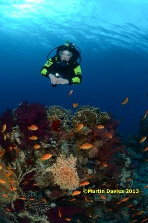Red-Sea-Shark-Yolanda-04052012-©Martin-Davies-007
