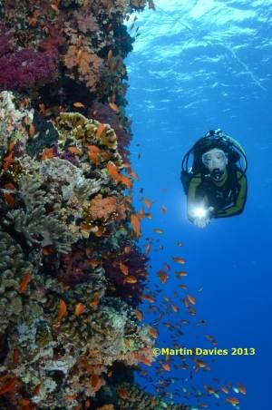 Red-Sea-Trawler-Mikalawa19062012-©Martin-Davies-062